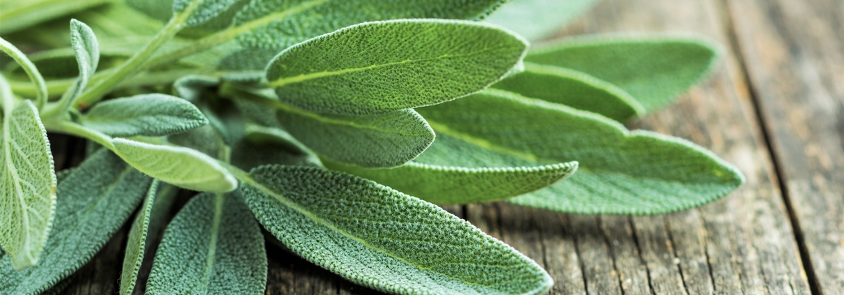 Salvia Essential Oil