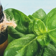 Basil Oil Benefits